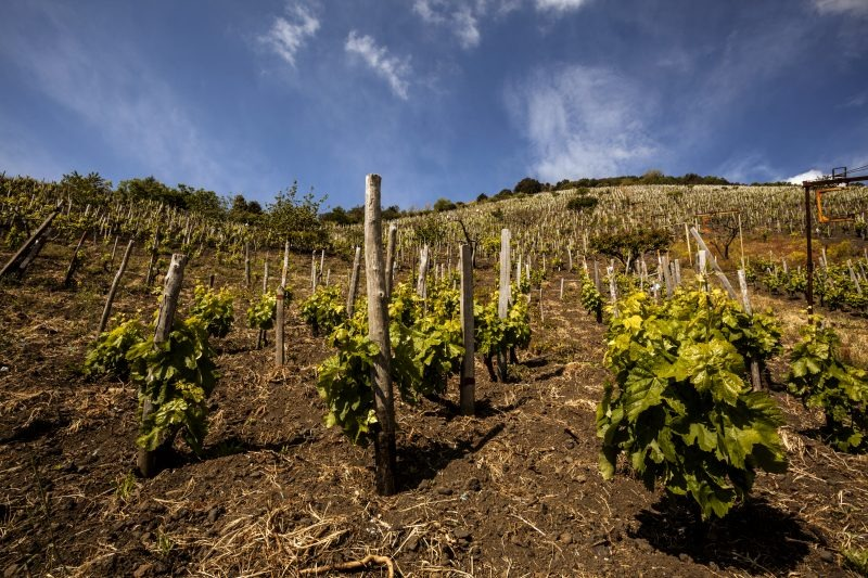 APUM TOP-TIER ITALIAN 100 SPARKLING WINES - RECOMMENDED DECANTER